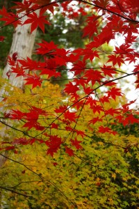 京都の紅葉(銀閣寺)