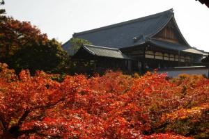 東福寺の方丈と紅葉