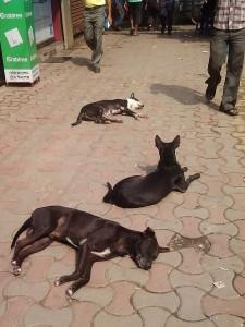 コルカタの野良犬たち