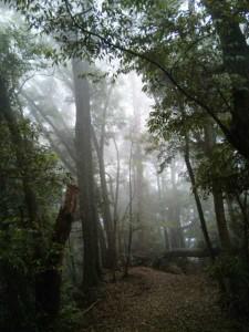 太龍寺への遍路道