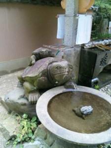 46番札所浄瑠璃寺の亀