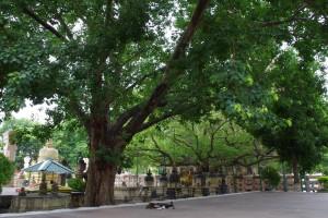 マハーボディー寺院の裏